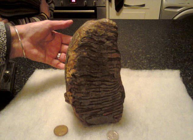 英海滨惊现罕见猛犸象牙化石 或形成于300万年前