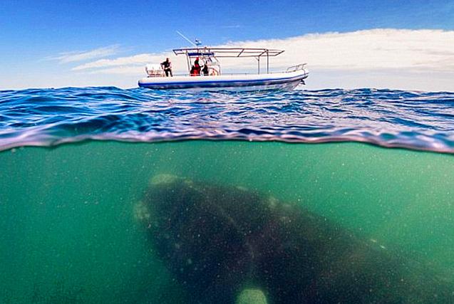 """深海""""梦魇"""":实拍恐怖的海洋生物"""