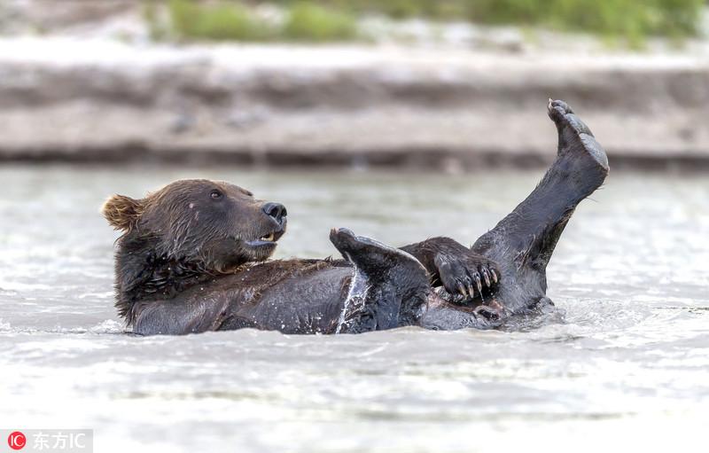 """俄懒熊让""""老婆""""捕鱼自己在湖中泡澡"""