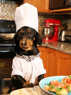加腊肠犬恋上厨房 有模有样表情超萌