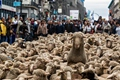 西班牙千只羊横穿马德里 捍卫迁徙放牧权