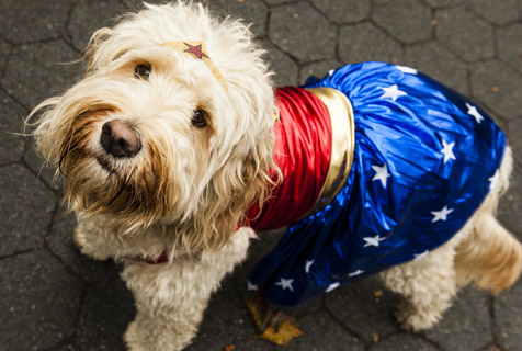 美国纽约举行万圣节狗狗游行