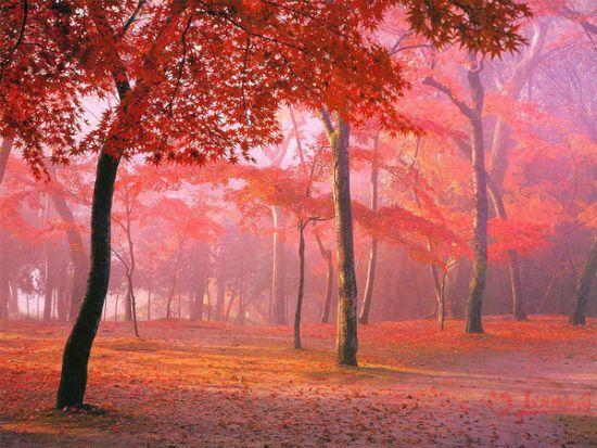 四川黑水满山红叶