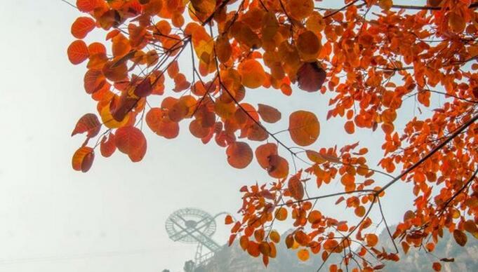 石林峡的叶子红了,我们何必去远方