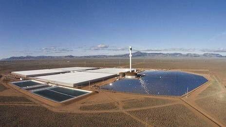 澳大利亚研发沙漠蕃茄 只需海水阳光便可种植