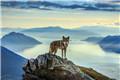 一只环游世界的狗