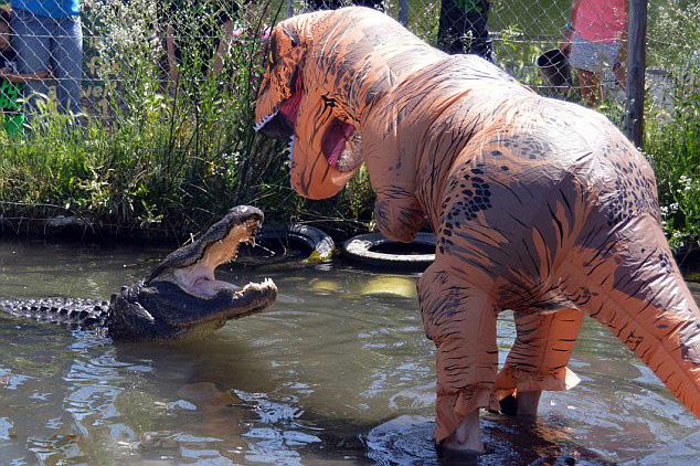 美动物园管理员假扮霸王龙戏弄真鳄鱼