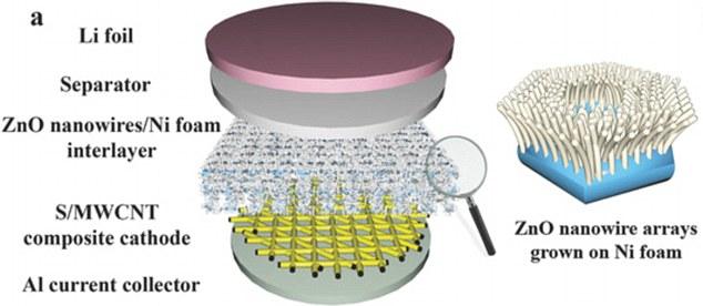 延长使用寿命 人类肠道构造激发新电池解决方案