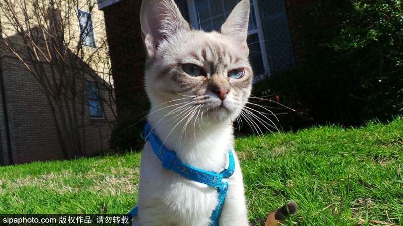 """来自美国凤凰城的""""暴躁猫""""(grumpy cat),凭着一副愁眉苦脸的样子红爆"""