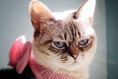 """美""""不耐烦猫""""走红 眉头深锁表情凶狠"""