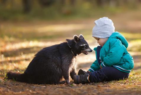 俄摄影师拍小男孩与浣熊写真画面温暖