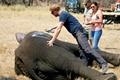 """哈里王子参与保护动物 帮助非洲大象""""搬家"""""""