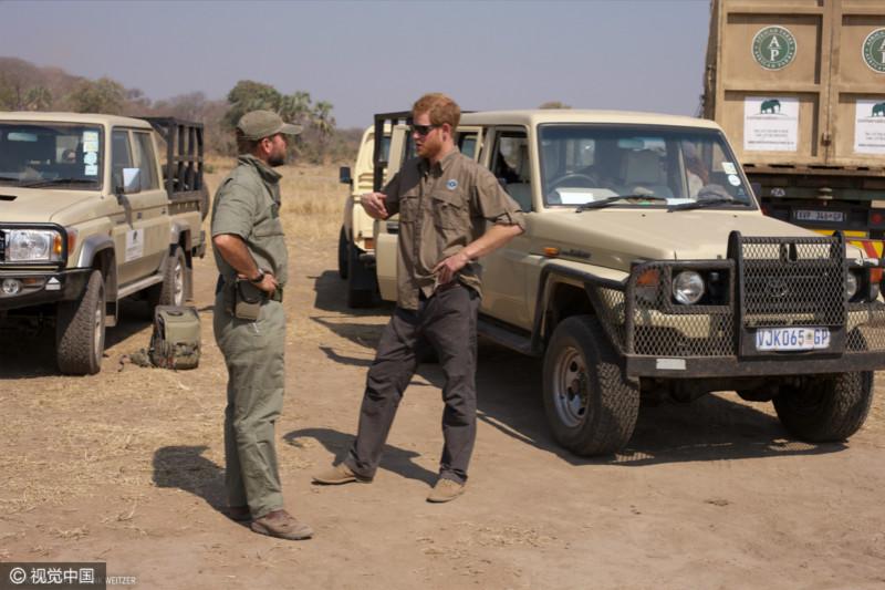 """英国哈里王子参与保护动物活动 帮助非洲大象""""搬家"""""""