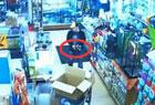 小偷宠物店偷蟒蛇塞裤裆