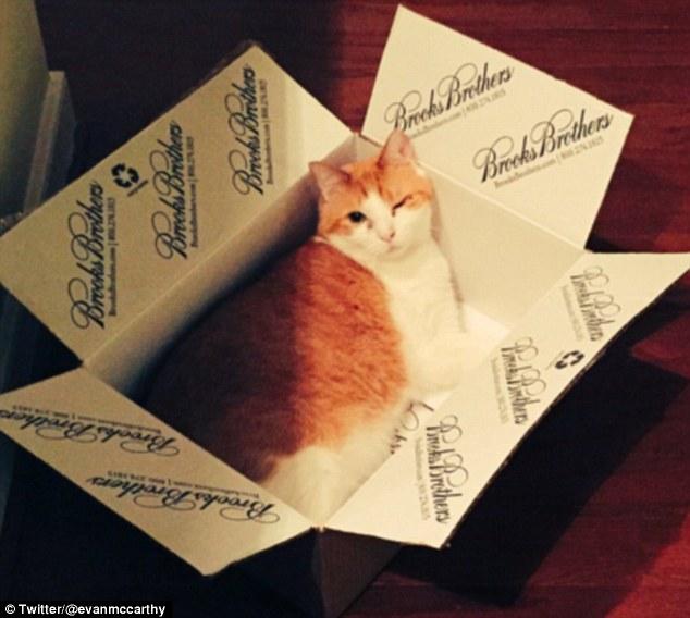 宠物猫纸盒中打盹儿照片走红网络
