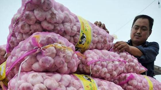 """英媒:大蒜价格一路飙升 中国正应对""""疯狂的大蒜"""""""