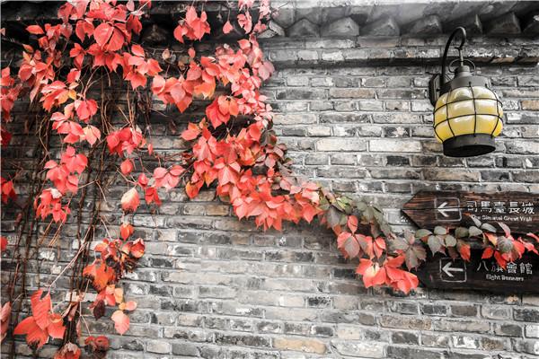 不负京郊清秋美 静谧之处赏红叶