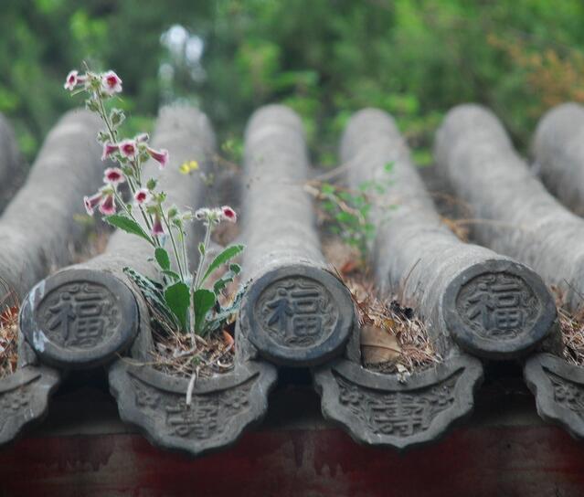 民俗旅游专业村——平原村