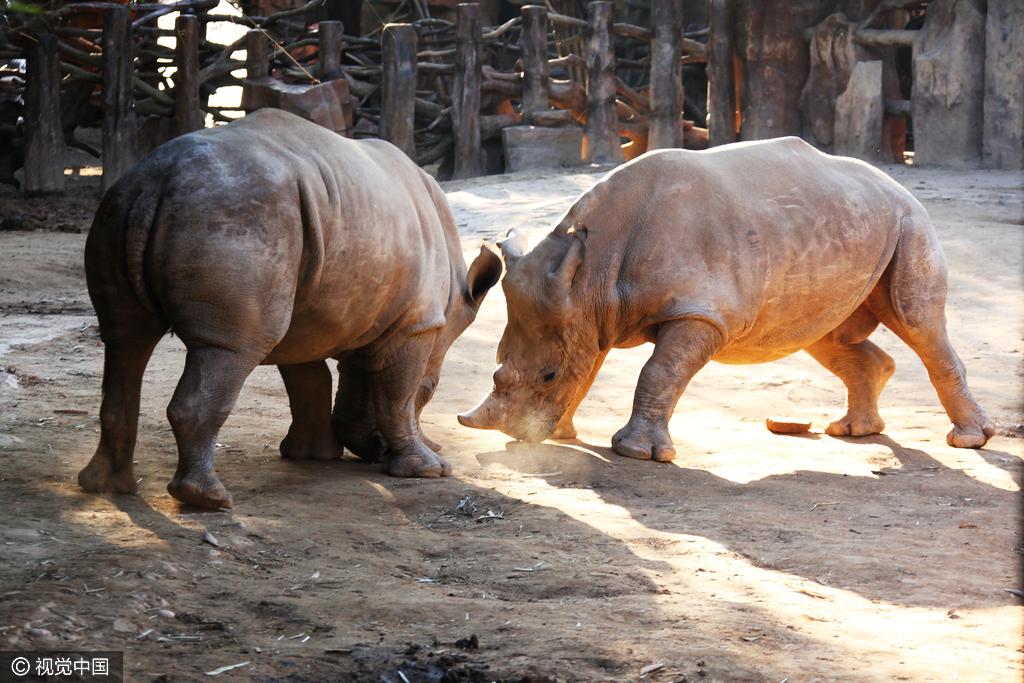 壁纸 动物 马 骑马 犀牛 野生动物 1024_683