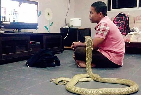 男子坚称女友转世成蛇 与其同吃同住