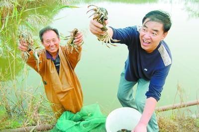苇塘河蟹鉴别方法