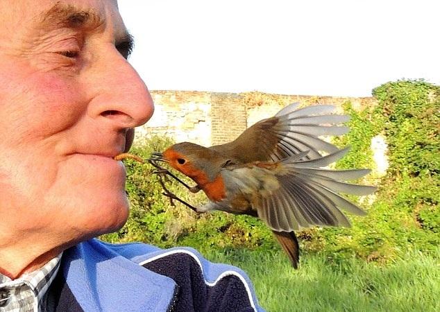 """英老人与鸟类亲密无间被称""""鸟人"""" 可用嘴喂食"""