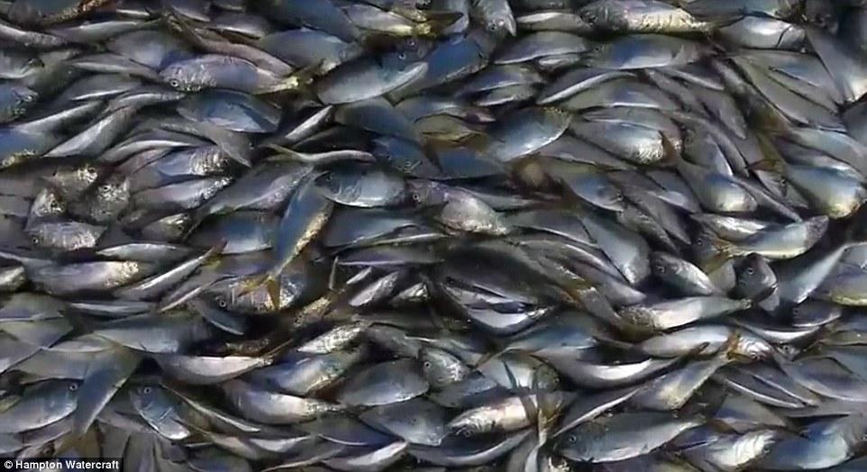 震撼!无人机拍纽约长岛运河惊现大量死鱼