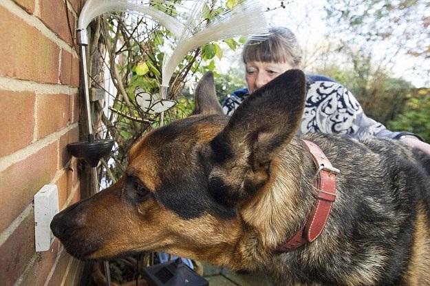 英流浪狗变身全能狗 热爱学习能听会做