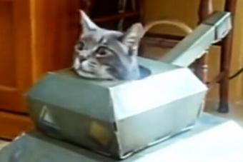 各种宠物遇上模型坦克的反应