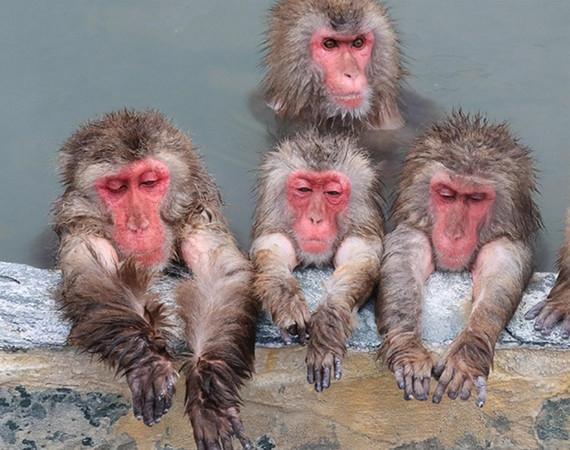 日本猴泡温泉画面销魂:这欠揍的死表情…