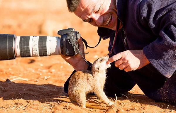 超萌!非洲猫鼬向摄影师撒娇求食物