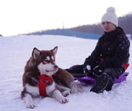王思聪现身长白山滑雪 网友:王思聪要买单吗?