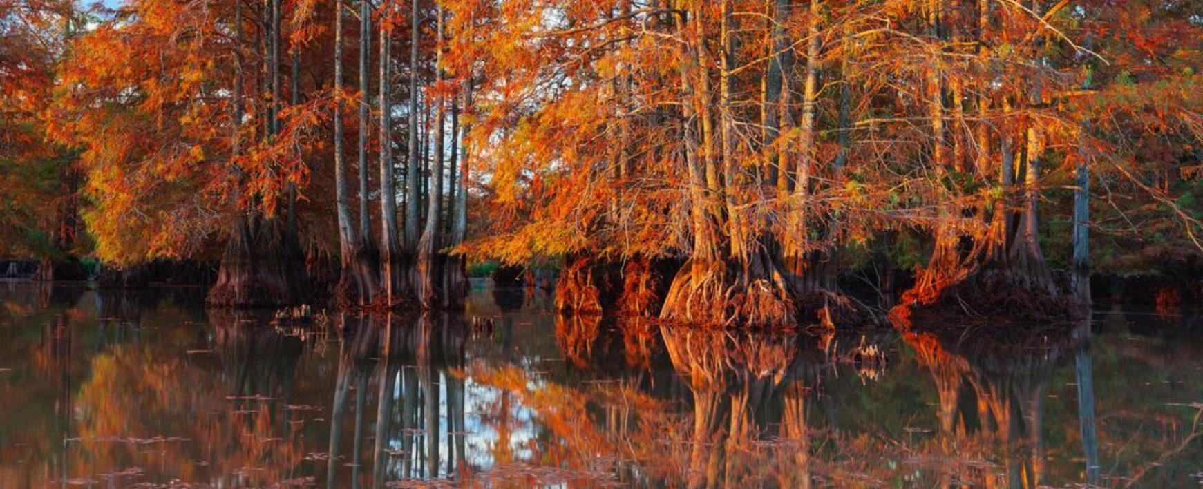 """湖光水色不一样的""""枫""""景"""