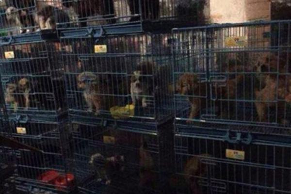 """号称""""最大宠物救助组织"""" 暗地非法贩卖宠物"""
