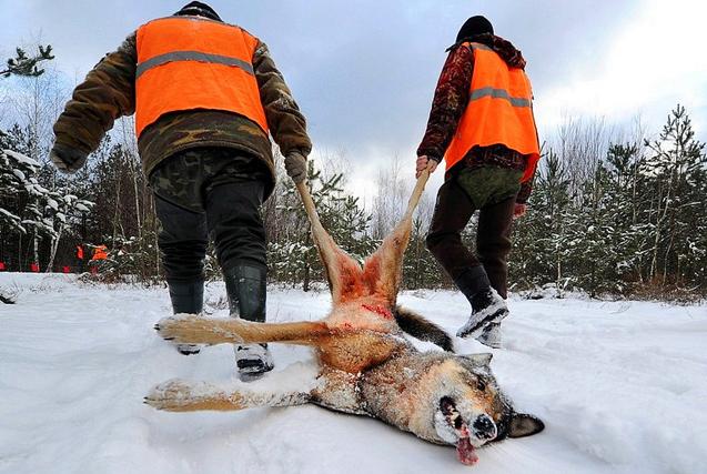 闻风丧胆!探访白俄罗斯捕狼人的日常