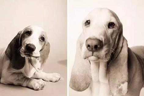 花20年记录狗如何老去