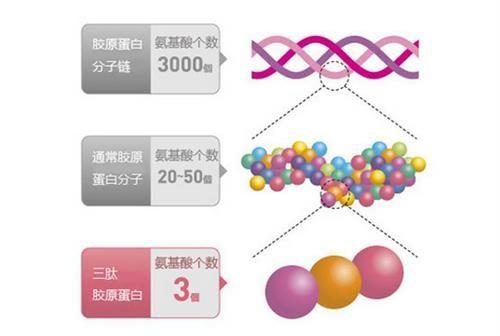 胶原蛋白的作用与功效