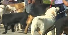 巴基斯坦:举办狗展 大博眼球