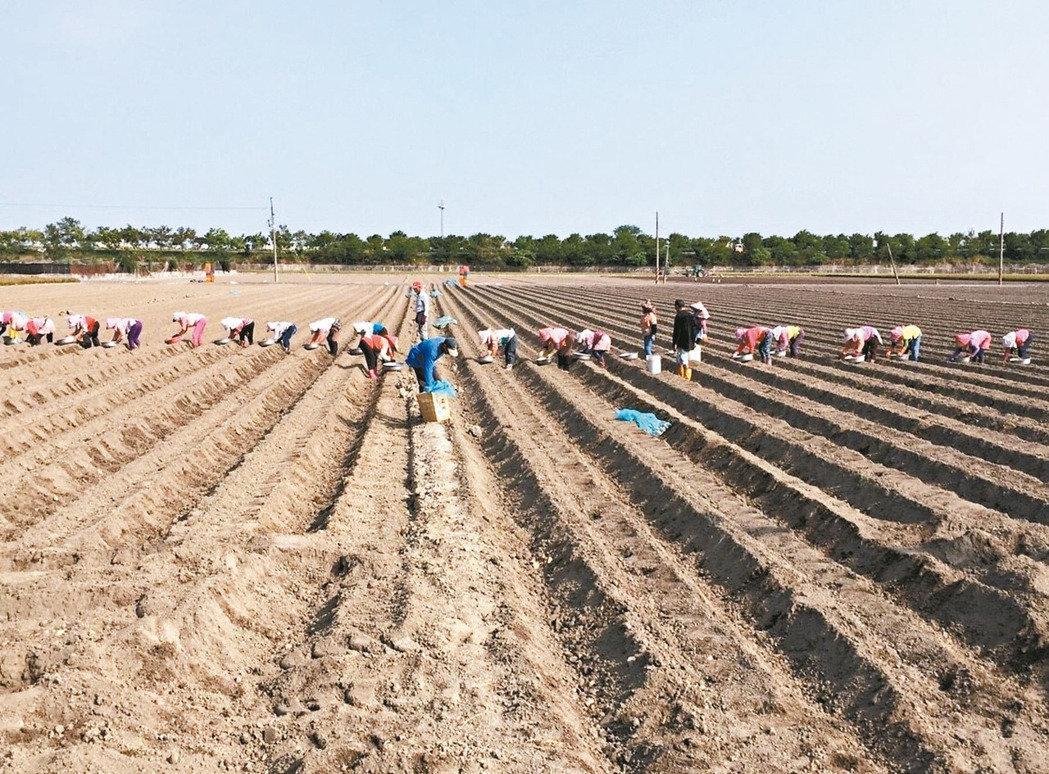 台当局将拟大学公费生从农政策 每年三千人救缺工