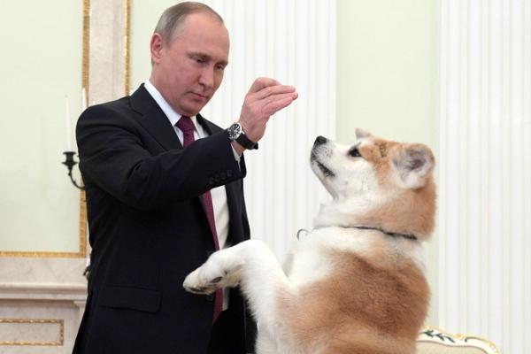 普京接受日本电视采访前与其秋田犬互动玩耍