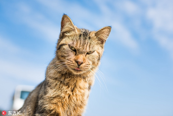 摄影师探访日本猫岛 竟遭一只喵星人怒视