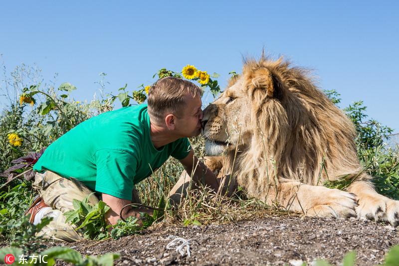 摄影师拍人兽情深:雄狮与人类亲密亲吻
