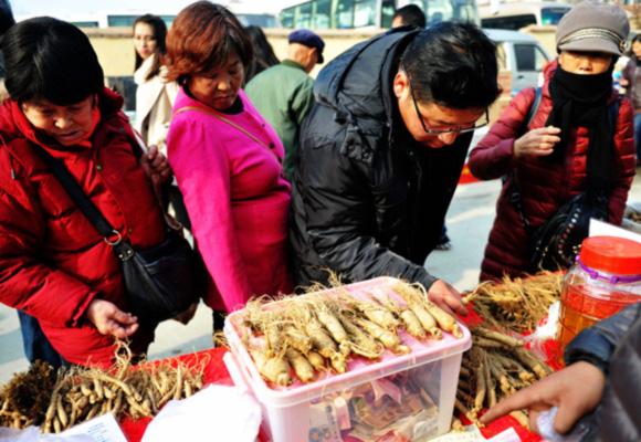 青岛集市上人参比白菜还便宜 市民竞相购买不犹豫
