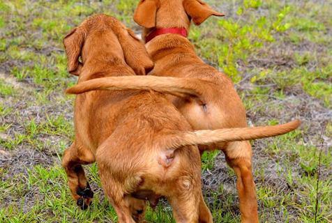 动物搞笑起来你拦都拦不住