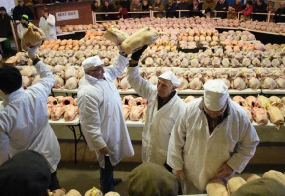 英国圣诞火鸡拍卖 民众疯抢800只家禽