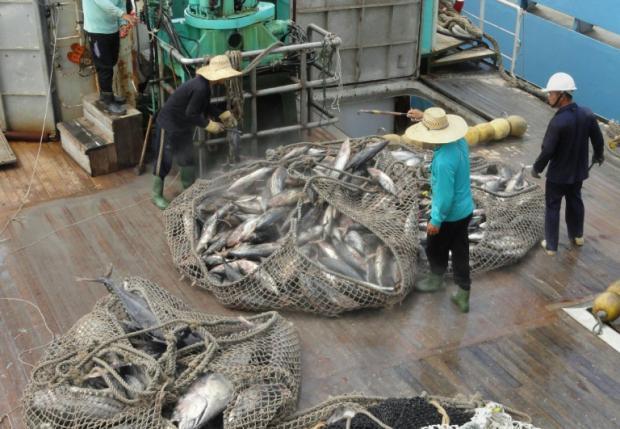 研究:若不能达成巴黎协定目标 恐损失600万吨渔获