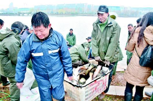 武科大沁湖捕鱼两万斤 学生可凭票免费吃红烧鱼块