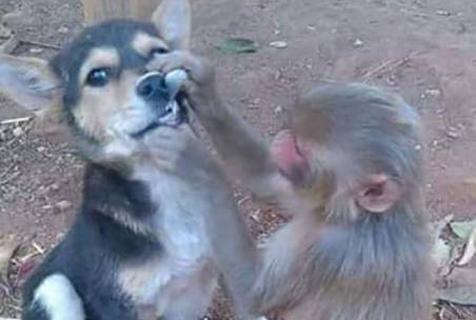 """物种不同,也能""""相爱"""""""