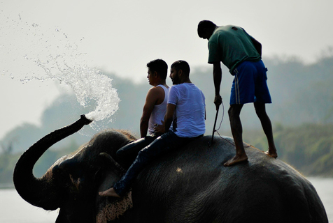 尼泊尔大象节 民众骑大象河中沐浴