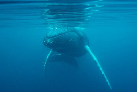 摄影师在英海域首次拍到座头鲸照片